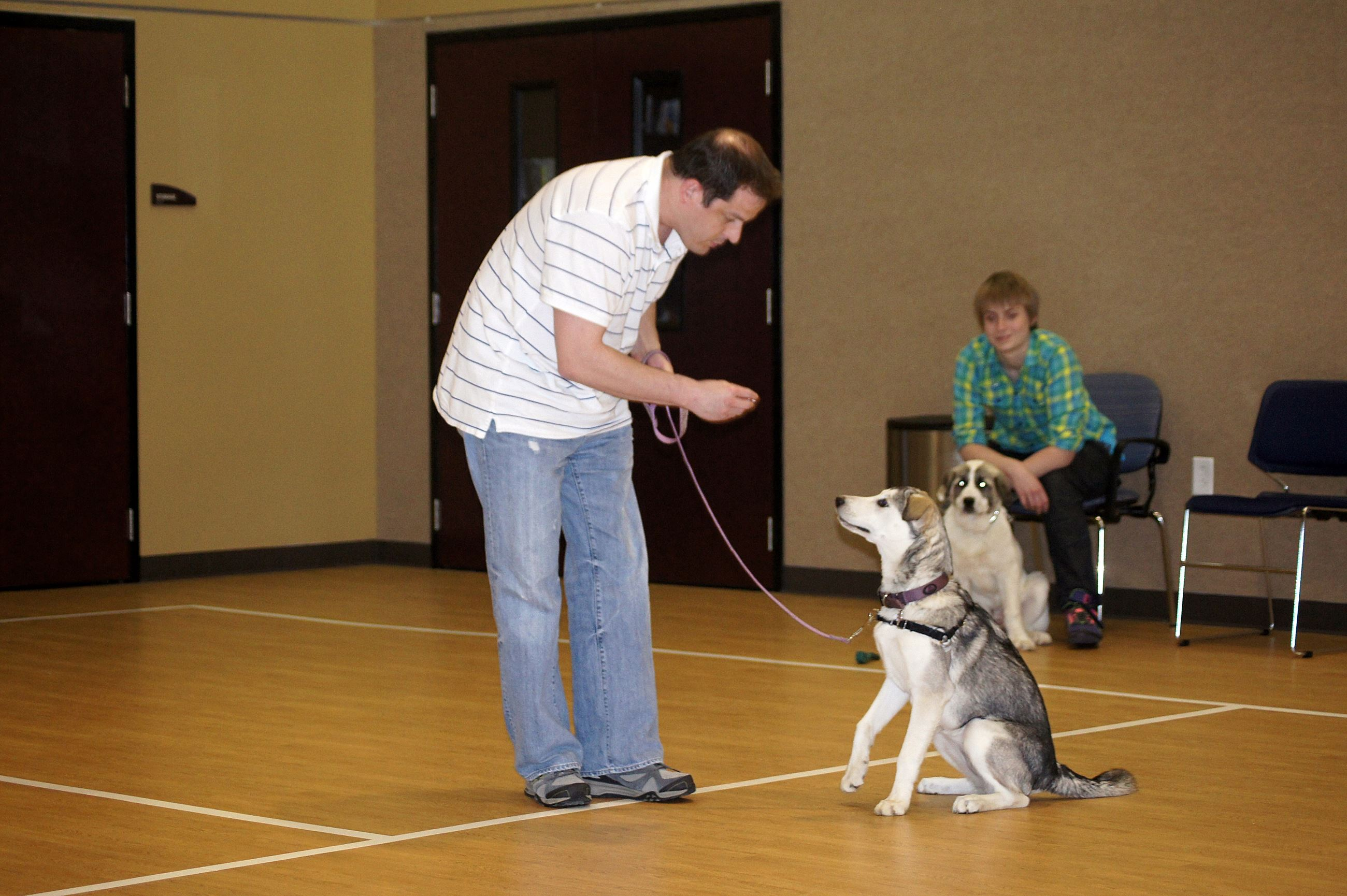 Dog Training Picture
